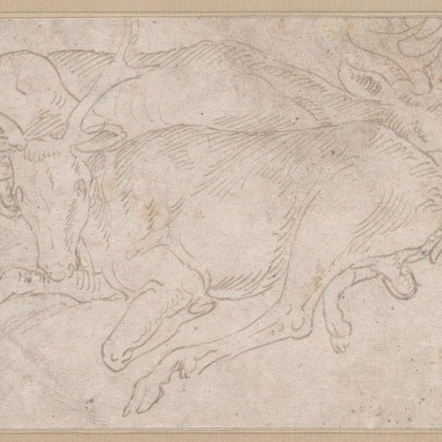 Twee liggende herten