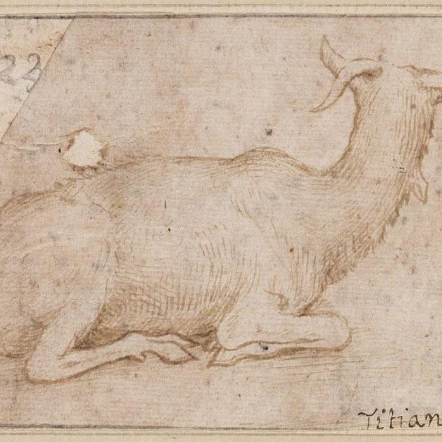 Liggende geit