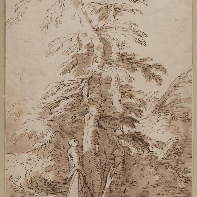 Wandelaar onder een grote boomgroep