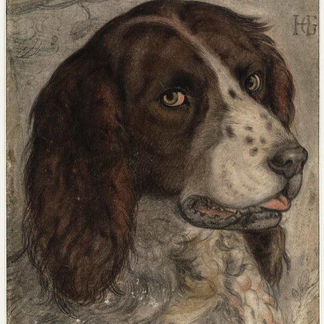 Goltzius's dog