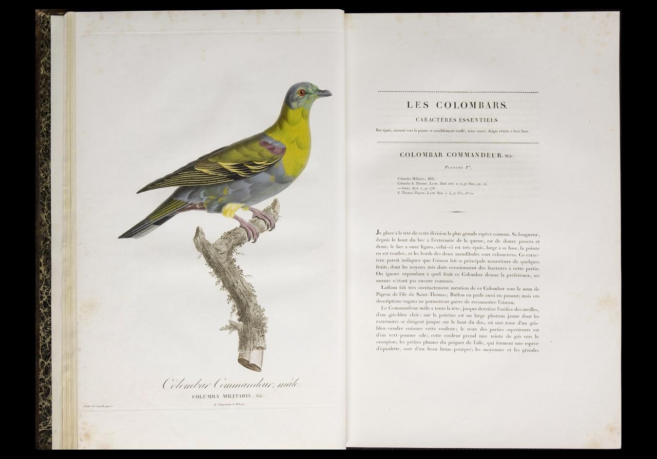 Histoire naturelle générale des pigeons.