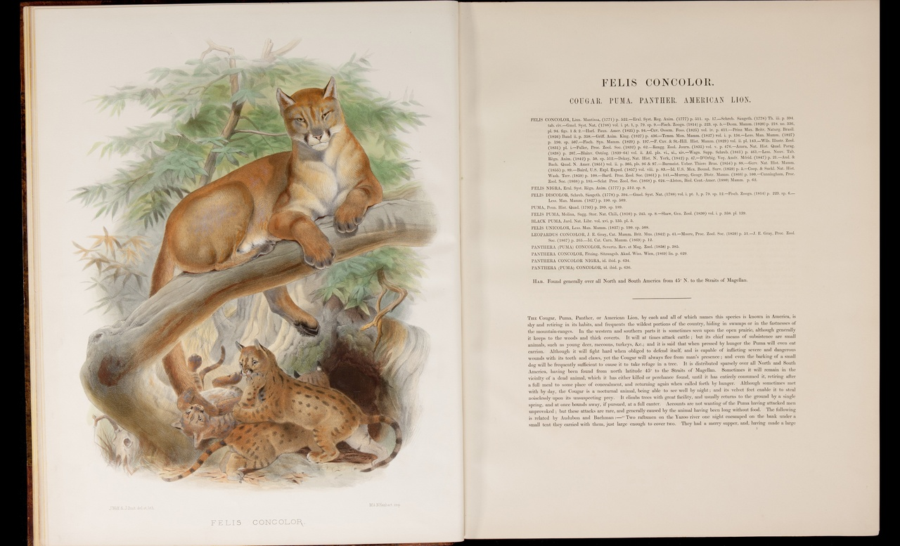 monograph of the Felidae or family of the cats