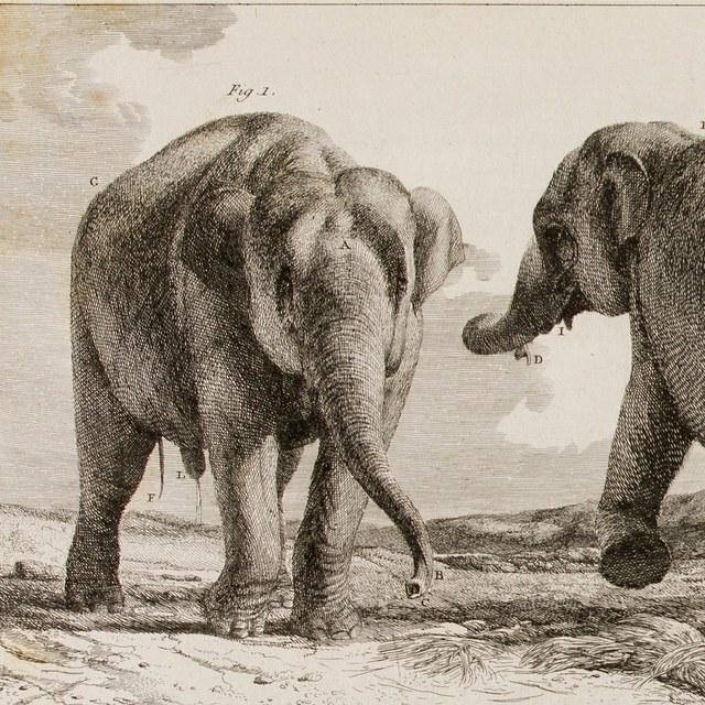 Histoire naturelle des deux Éléphans, mâle et femelle, du Muséum de Paris, venus de Hollande en France en l'an VI.