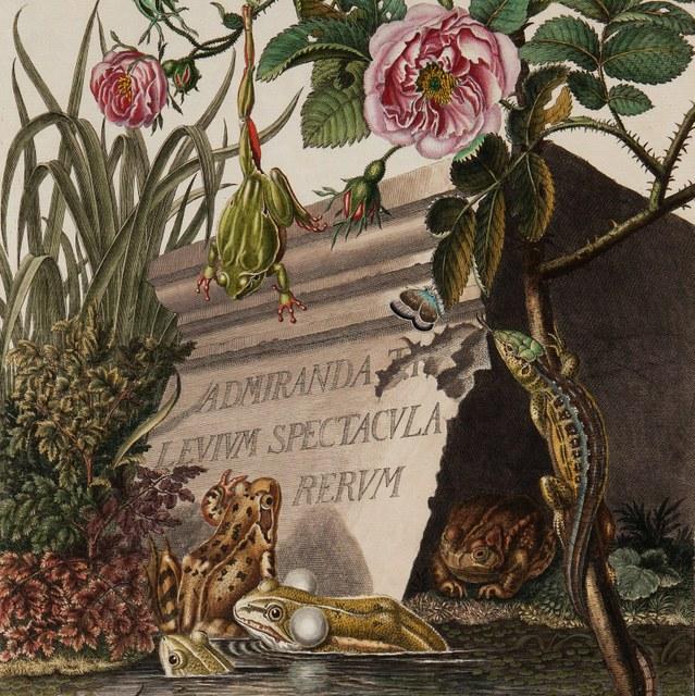 Historia naturalis ranarum nostratium.