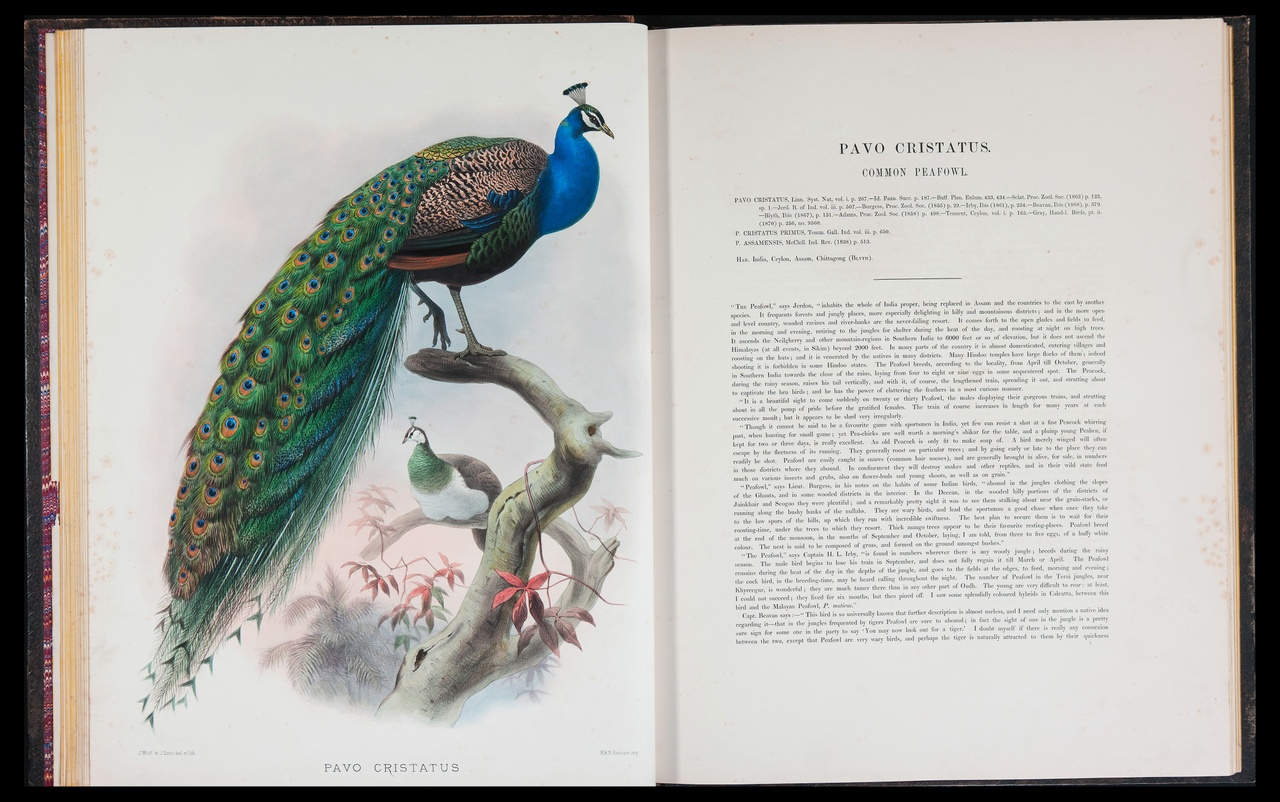 monograph of the Phasianidae or family of the pheasants.