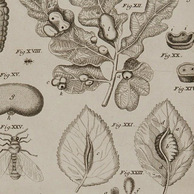Biblia Naturae; sive Historia Insectorum, in classes certas redacta nec non exemplis, et anatomico variorum animalculorum examine, aeneisque tabulis illustrata; etc.