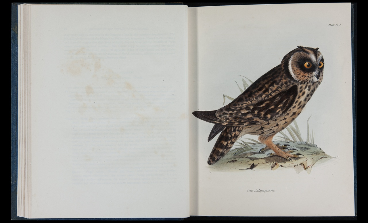 The zoology of the voyage of H.M.S. Beagle, under the command of Captain Fitzroy, R.N., during the years 1832 to 1836.