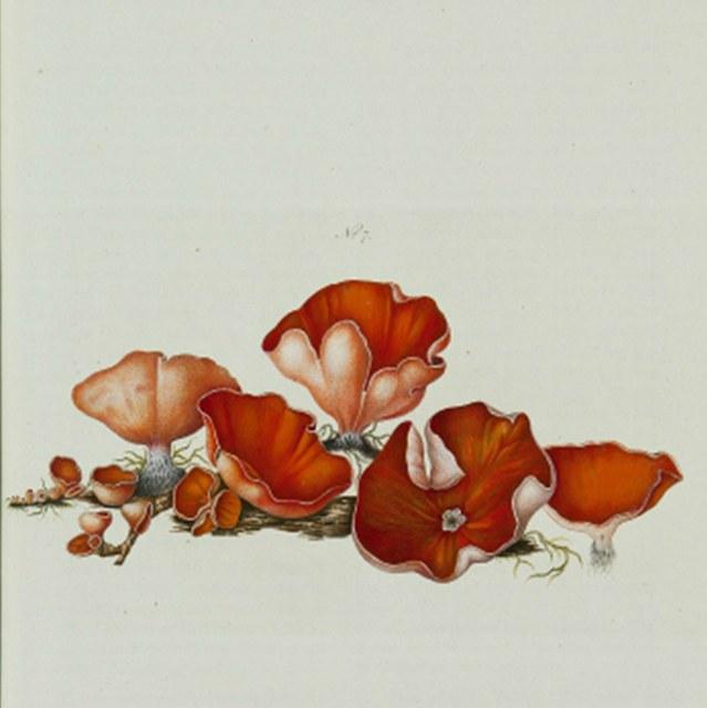 Beata ruris otia fungis danicis impensa.