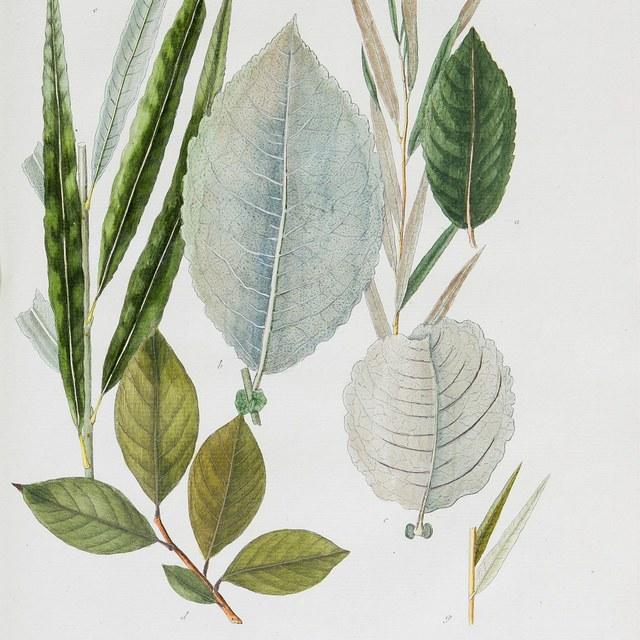 Historia Salicum iconibus illustrata.