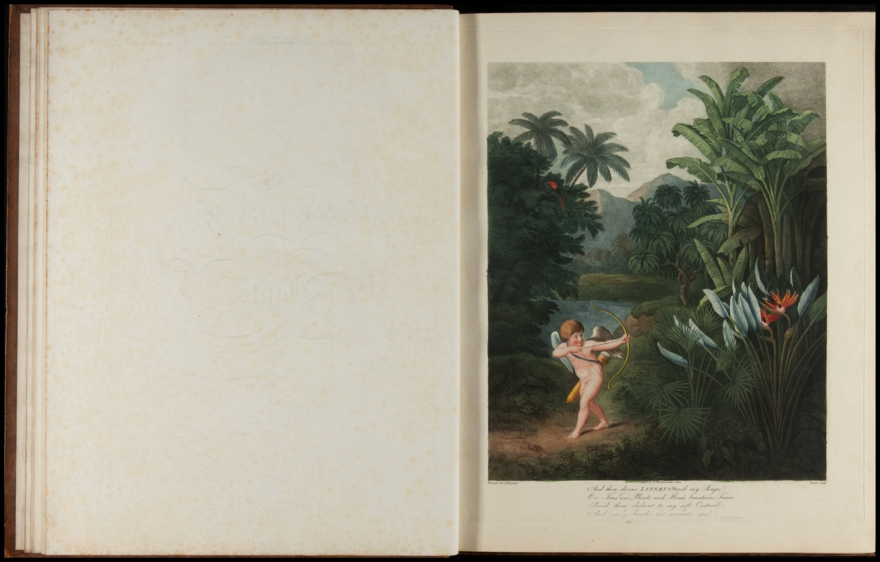 The temple of Flora or garden of nature. Picturesque botanical plates of the new illustration of the sexual system of Linnaeus.