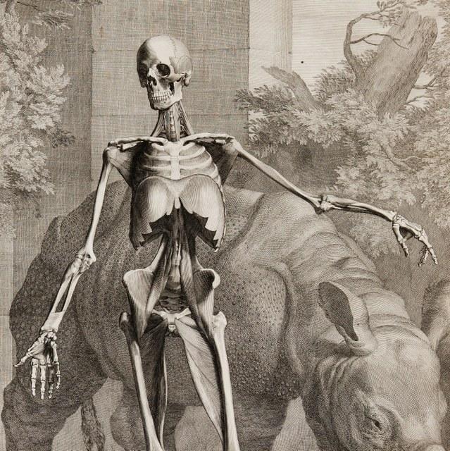 Tabulae sceleti et musculorum corporis humani.