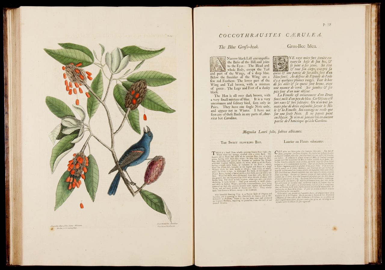 The natural history of Carolina, Florida and the Bahama Islands: containing the figures of birds, beasts, fishes, serpents, insects and plants; particularly the forest-trees, shrubs, and other plants ... to which are added observations on the air, soil and waters.