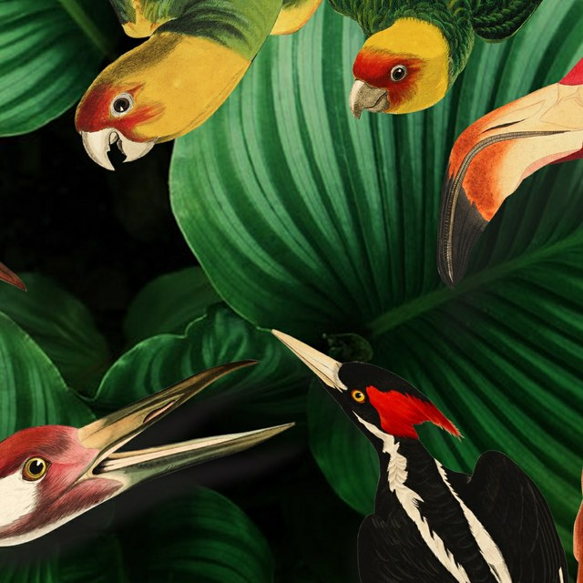 The Splendour of Birds