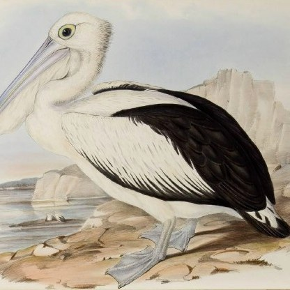 Vogels XXL
