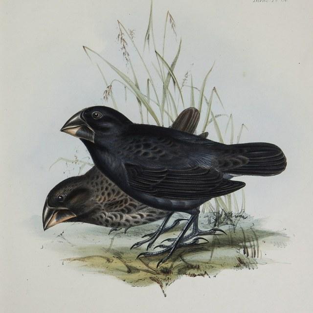 Darwin, vinken en spotvogels