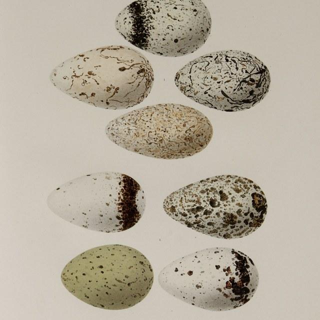 Eieren in overvloed