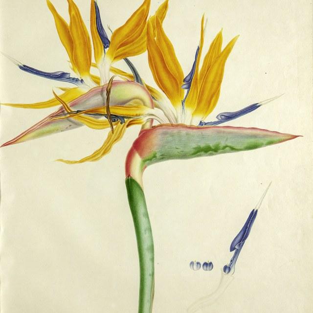 Botanische meesterwerken van de gebroeders Bauer