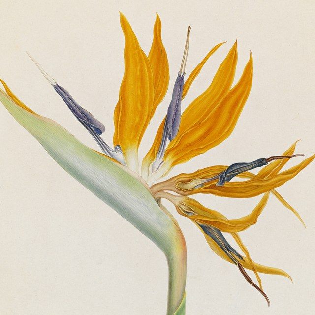 Botanisch tekenen met Margriet Honingh