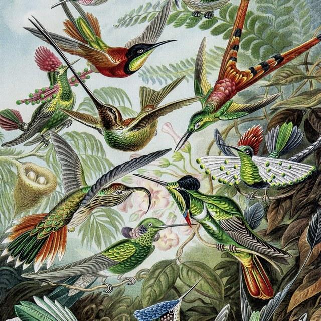 Ernst Haeckel - Kunstvormen in de natuur