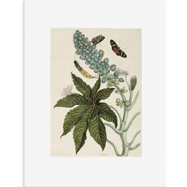 Reproductie bloemen en vlinders Merian