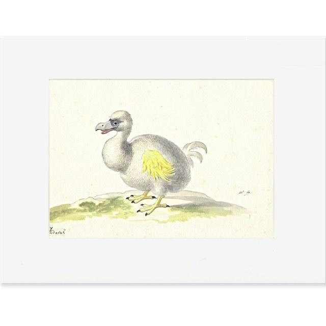 Reproductie Dodo Holsteyn
