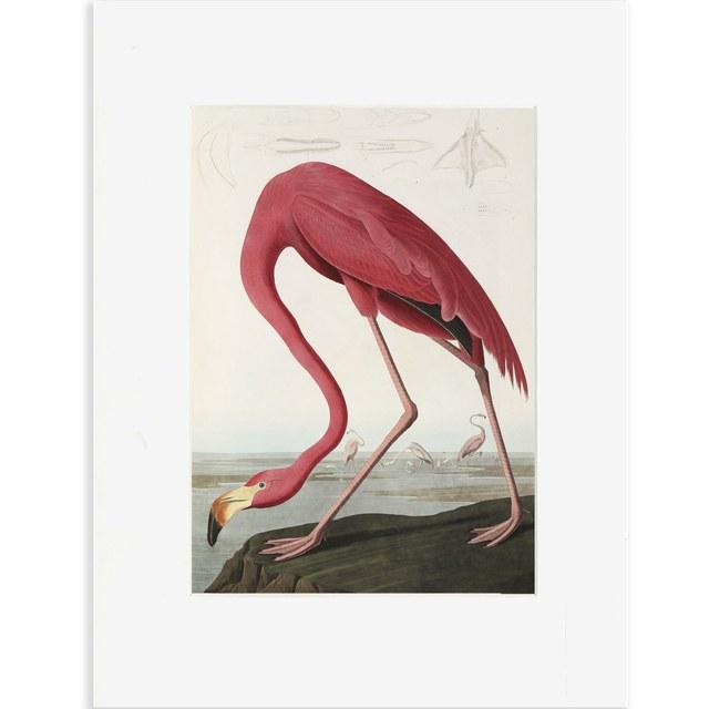 Reproductie Flamingo Audubon