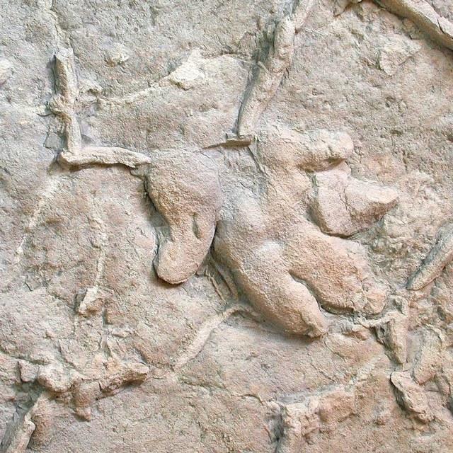 Pootafdrukken van de Chirotherium (groot handdier)