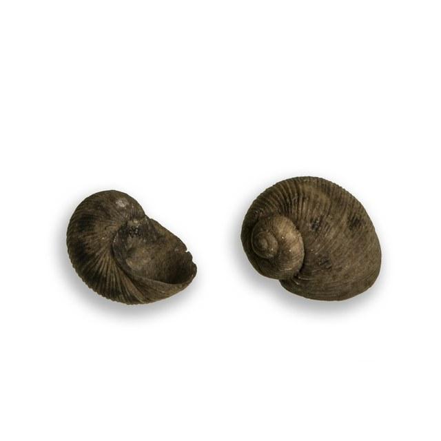 Tepelhoorn
