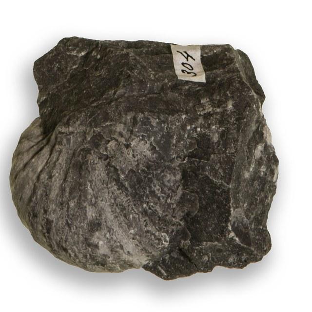 Brachiopoda (armpotigen)