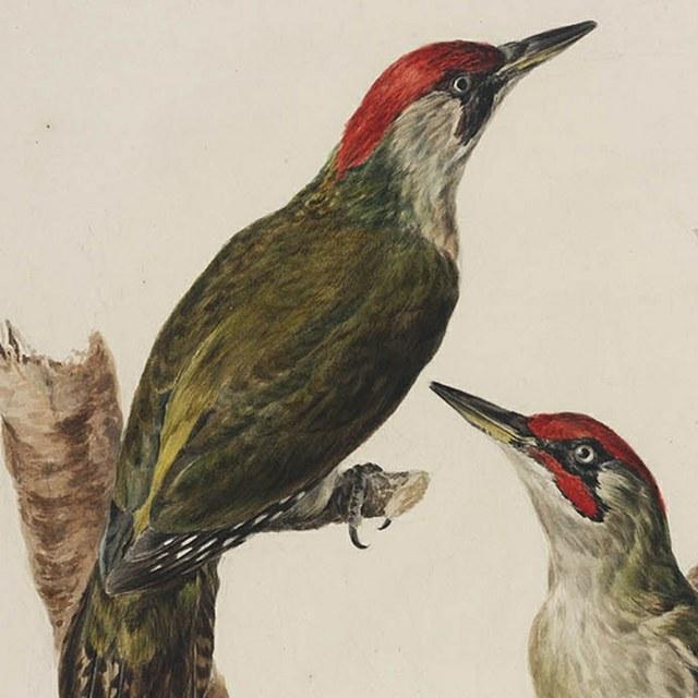 STERNA vogelboeken