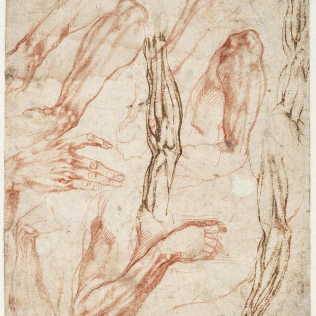 Anatomische studies van arrmen, benen en handen