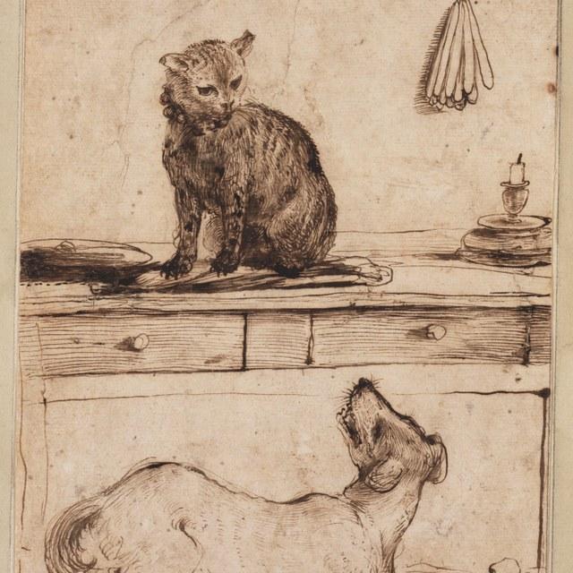 Een kat op tafel en een hond
