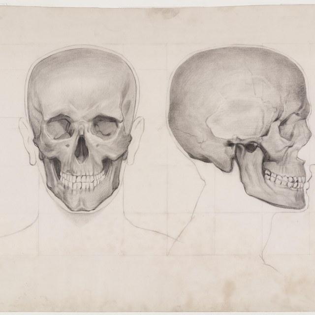 Twee schetsen van een schedel, in profiel en en face