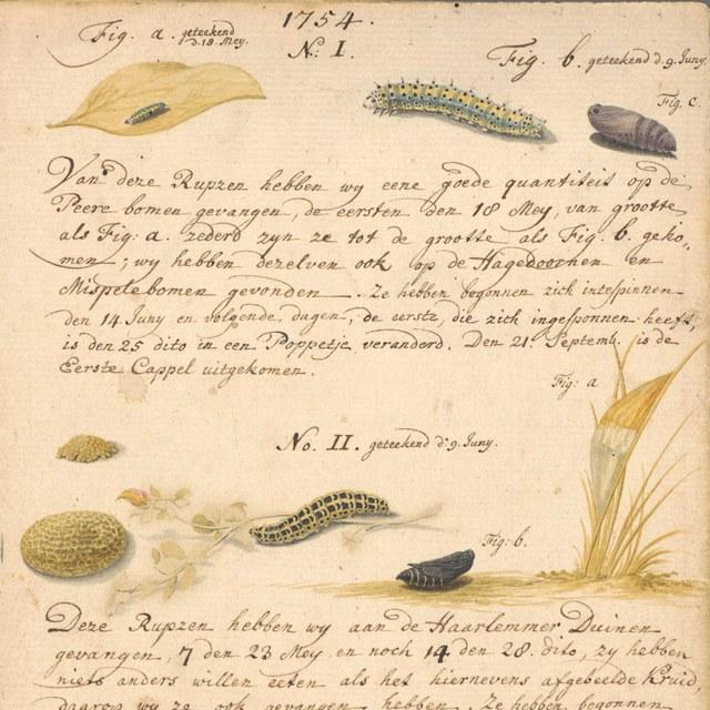 Handschrift met tekeningen van rupsen