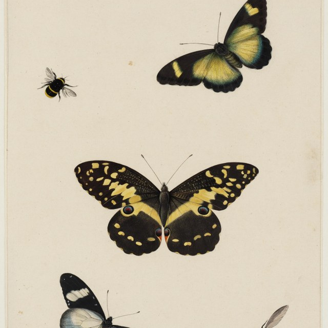 Drie vlinders en twee hommels
