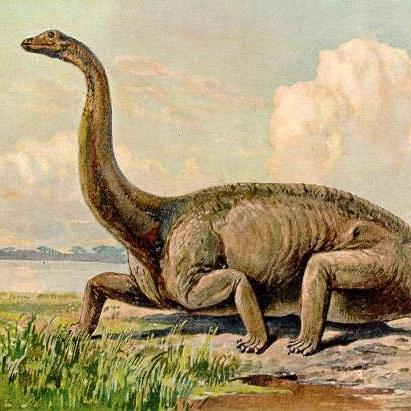 Dinospecialisten gezocht (4-12 jaar)