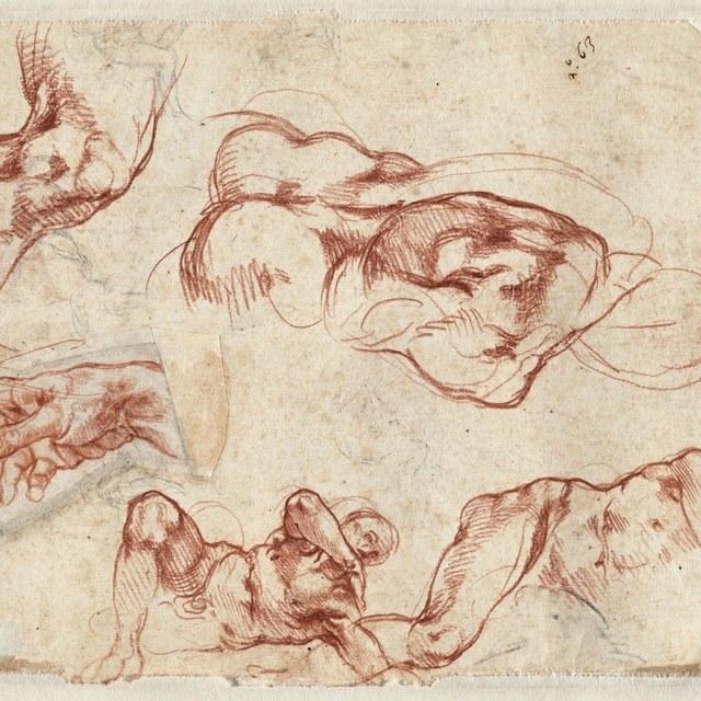Michelangelo's weer terug in Haarlem