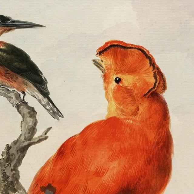 Teylers Ontmoet vogels